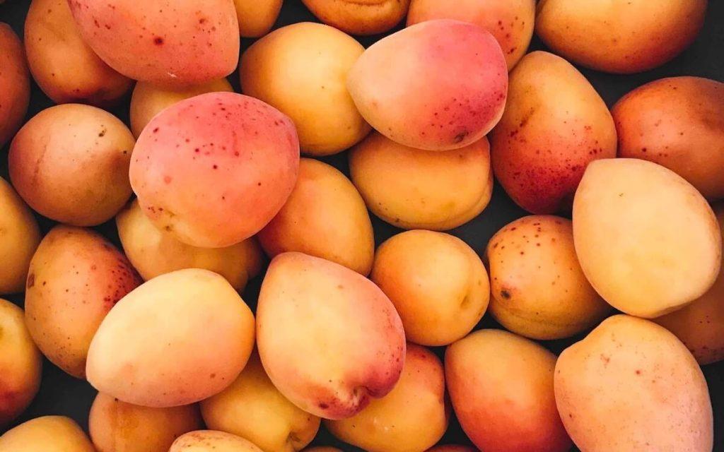 mango congelado fresco granel costa rica tommy